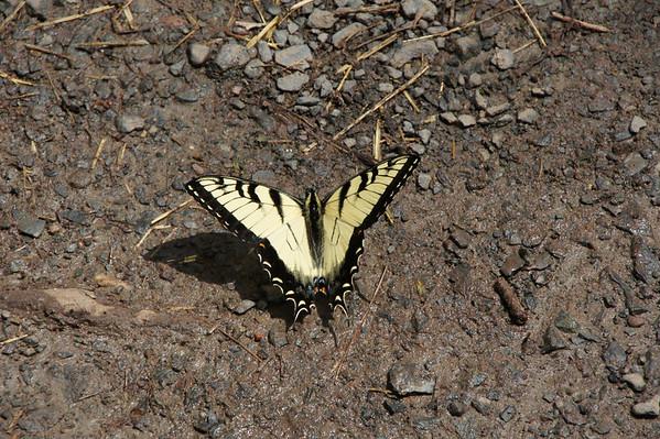 Butterflies, bugs.....