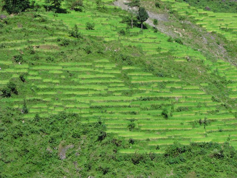 Nepal-249.jpg