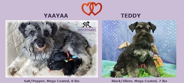 YaYa & Toby Puppies, DOB 2/12/2020