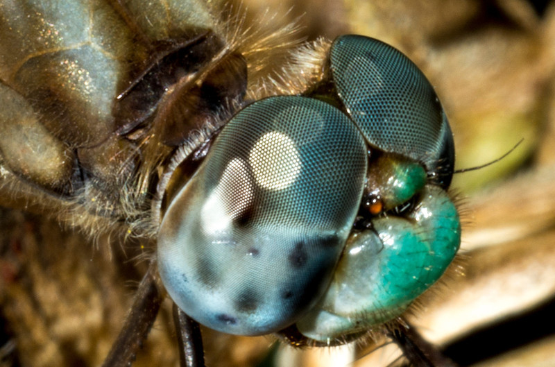 Eye Detail Closeup