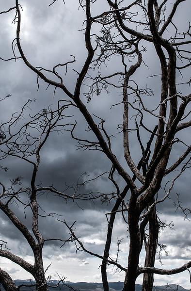 Trees, Silver City, Utah, 2000