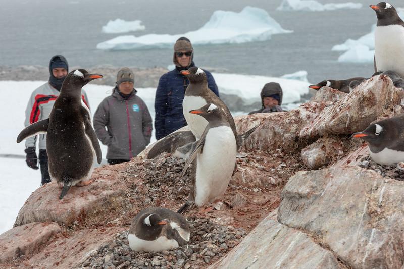 2019_01_Antarktis_05281.jpg