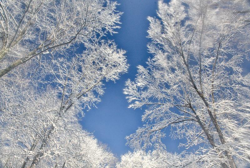 december 5 09 022-Edit.jpg