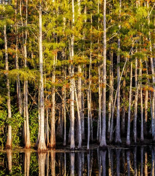 Grassy Water Preserve-.jpg