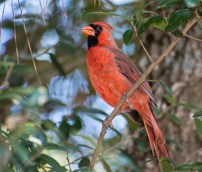 humming-bird-fest-4863.jpg