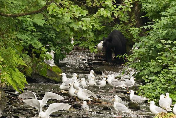 Bears - Valdez