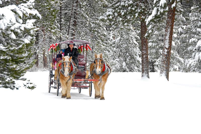 BBR-Holiday-carriage ride__KateThomasKeown_dsc7553rt.jpg