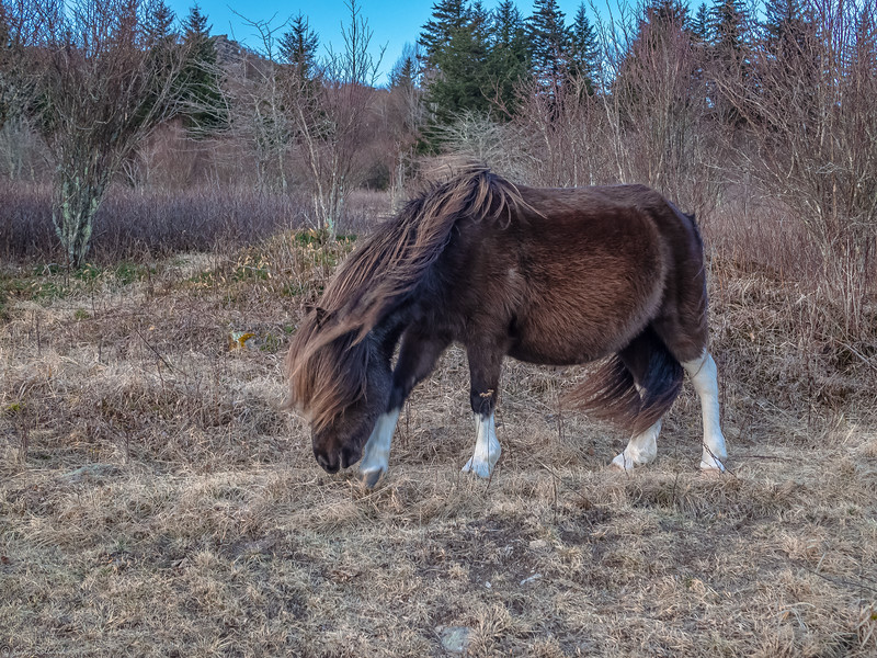 30 Jan 19 Grayson Grazing in wind xxx (1 of 1).jpg