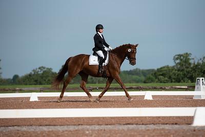Horse 369