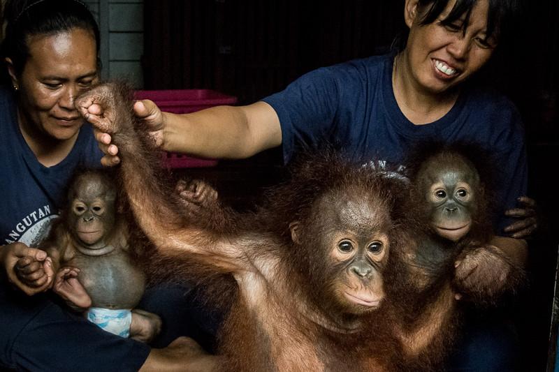 Borneo-2263.jpg