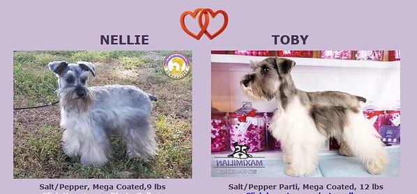 Nellie & Toby Puppies, DOB 1/29/2020