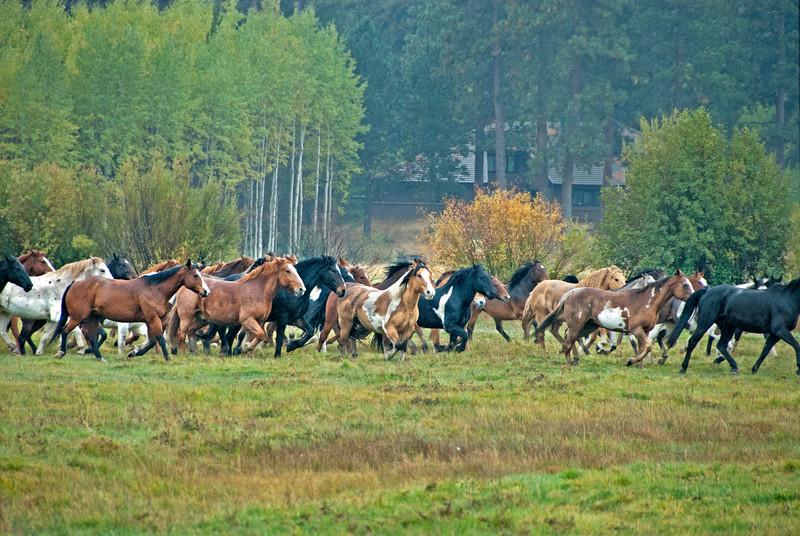 2010-1009-Horses-BBR-fall-synchronized-keown.kate_DSC2615e.jpg