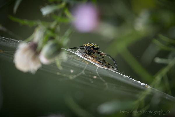 Spiders & Webs