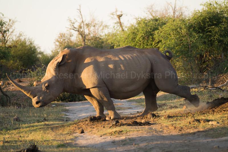 Madikwe-74.jpg