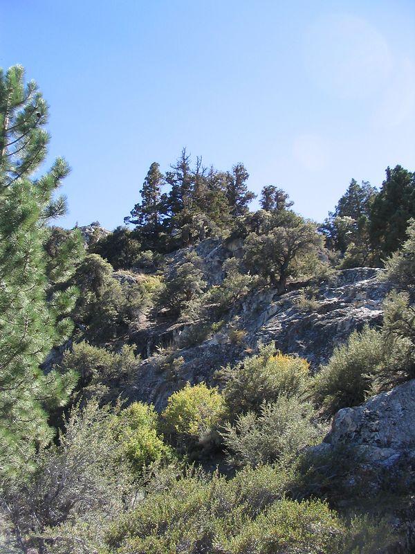 A hill beside Gull Lake.