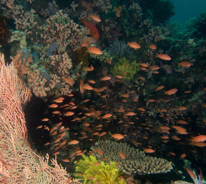 Reef2 (1 of 1).jpg