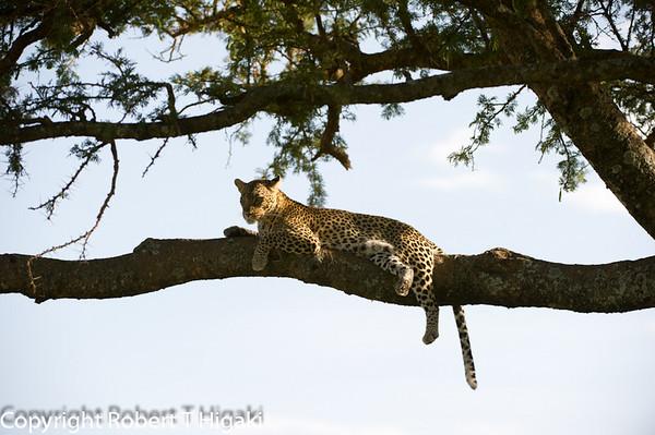 Tanzania-Serengeti Day 1