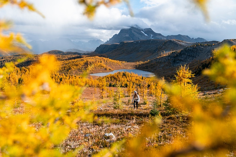 Hike Healey Pass in Autumn for Unbelievable Golden Larches