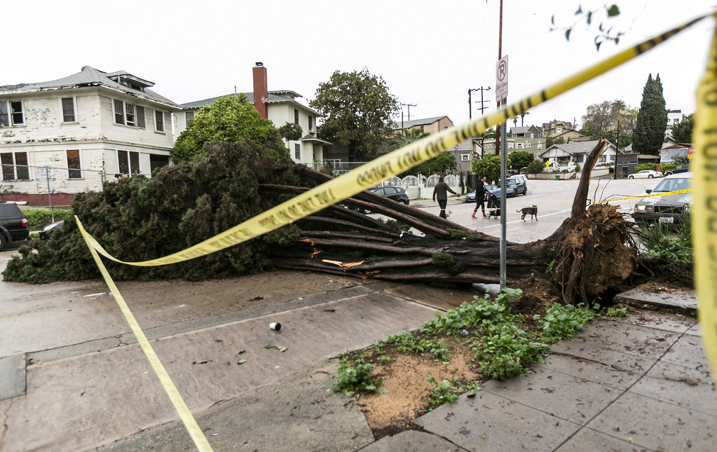 . Neighbors walk by a fallen tree in Echo Park section of Los Angeles Saturday, Feb. 18, 2017. A huge Pacific storm parked itself over Southern California and unloaded, ravaging roads and opening sinkholes in Los Angeles. (AP Photo/Damian Dovarganes)