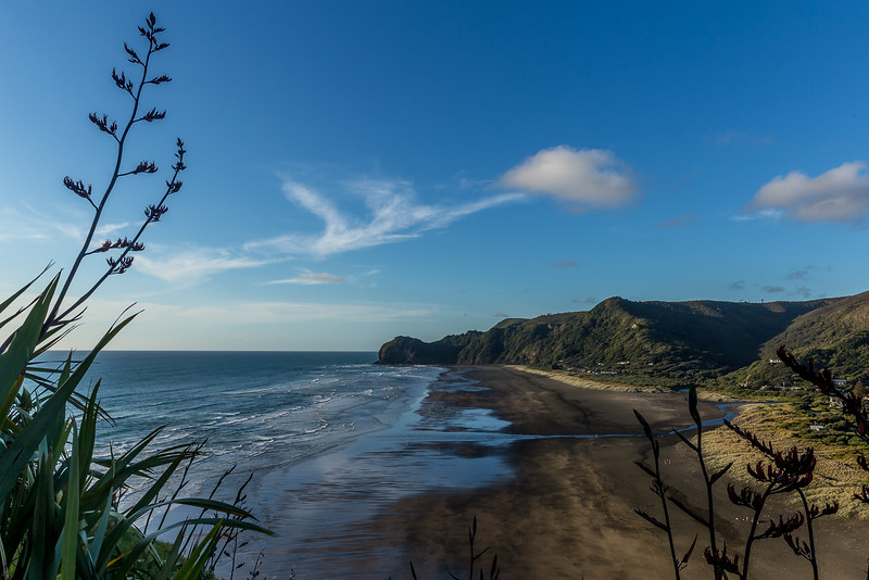 Die Piha Beach vom Lion Rock