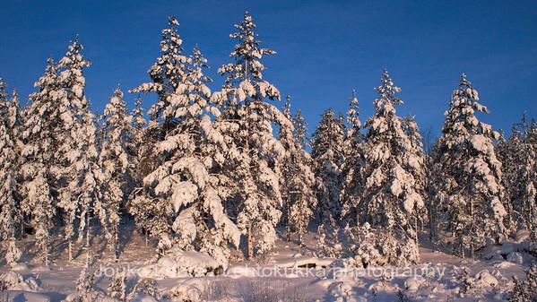 Wintertime - talvi