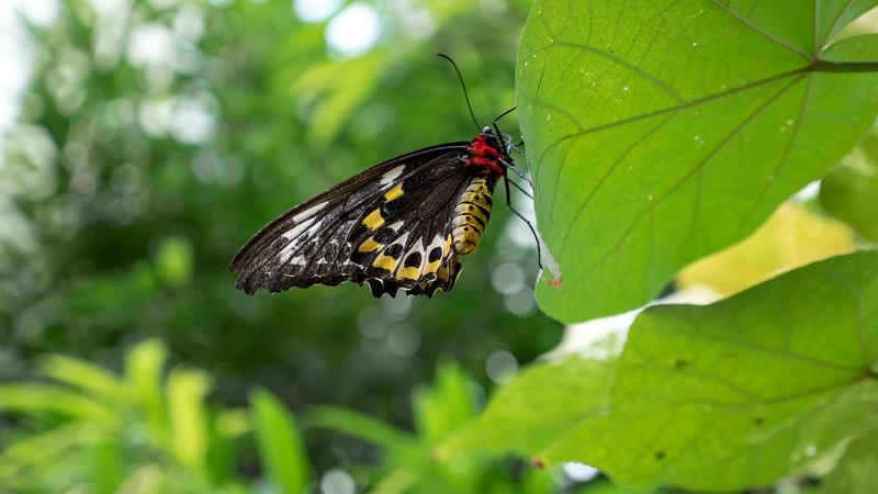 Florida-Keys-Key-West-Butterfly-Conservatory-02.jpg