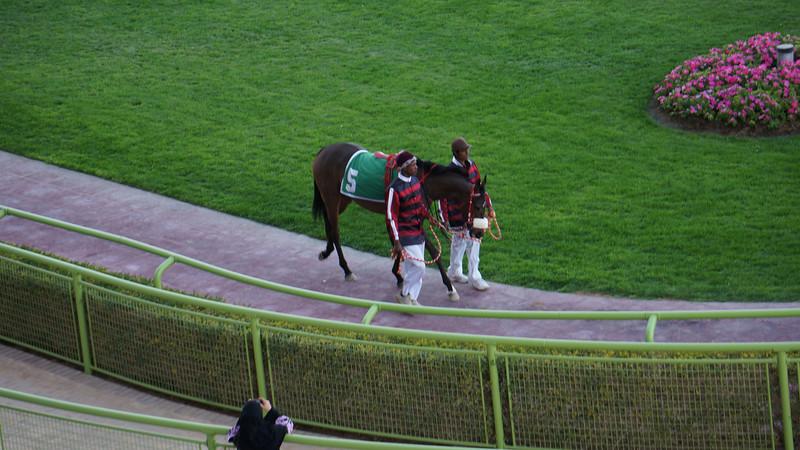 2013 Horse Race @ Riyadh - MFA Invitation