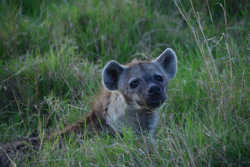 East Africa Safari 188.jpg