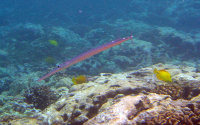 510- 20080416- Hawaii 20-Snorkelling IMG_0763.jpg