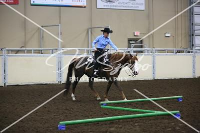 Alberta Morgan Horse Show 2016