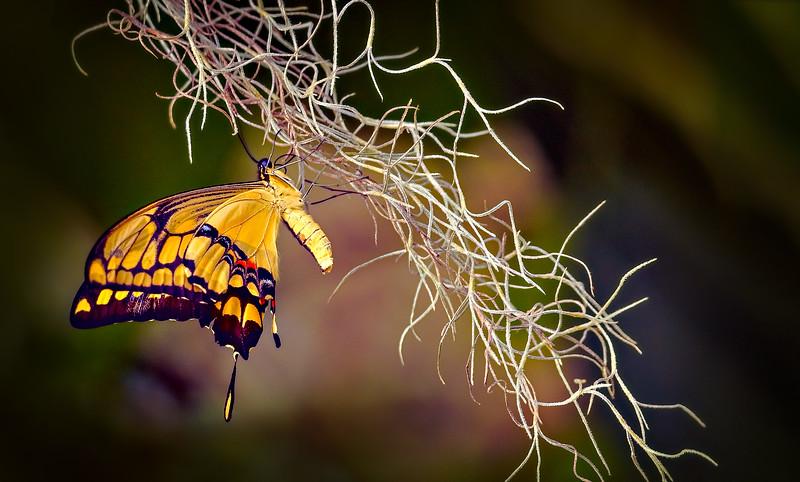 Butterfly-206.jpg