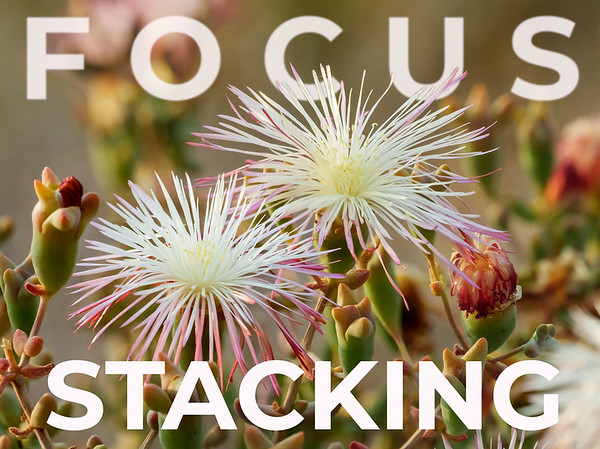 Photo Tips - Focus Stacking