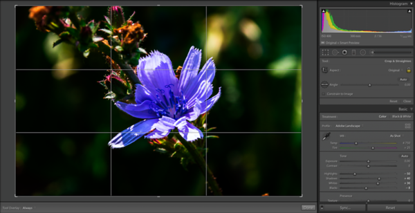 Crop Overlay Tool with an Image where the Grid Overlay is set to Active  The Crop Overlay Tool's Aspect Ratio settings explained