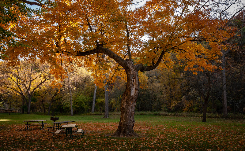 Fall_20201008_100949.jpg