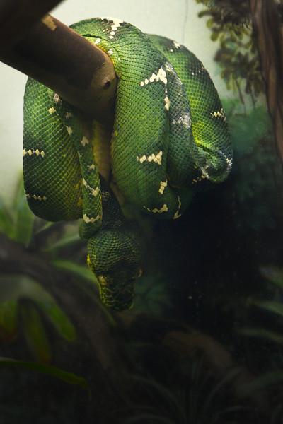 Cleveland Zoo Rainforest