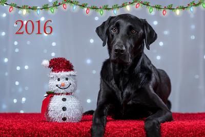 Christmas-Pet-Gallery