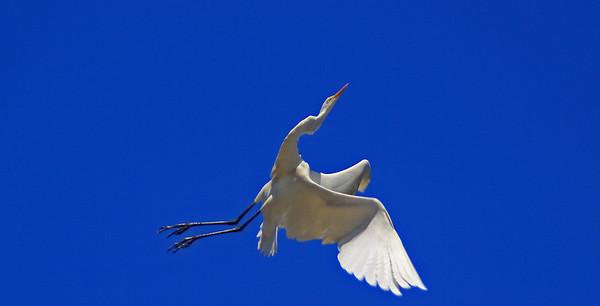 NC Birds II