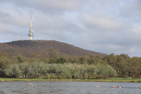 Sri Chinmoy Lake Swims, Canberra, Sunday 23 February 2020