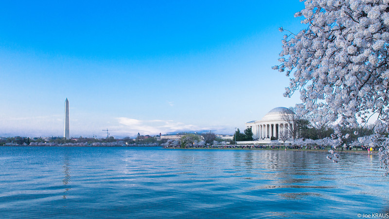 Cherry Blossim Washington