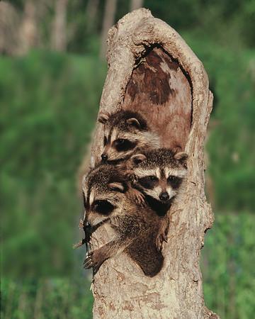 Minnesota Wildlife