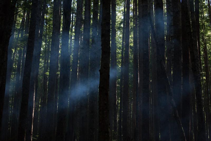 150913_Nikki_Forest_5458.jpg