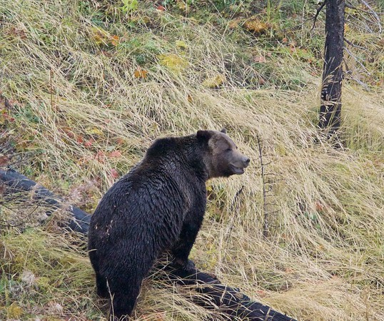Wolf and Bear Expeditions