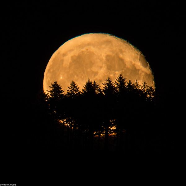 Moonrise  Behind Trees