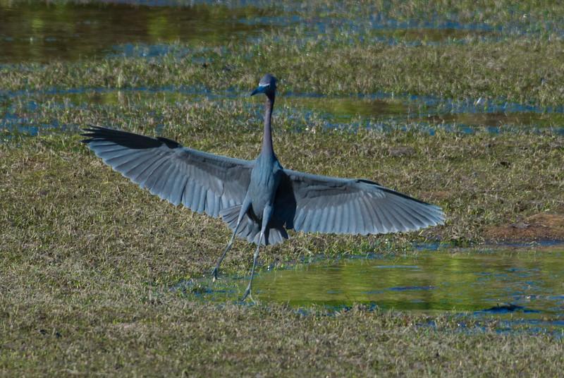 19-Sept North America Birds-8772.JPG