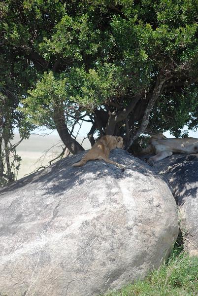 Serengeti (183).JPG