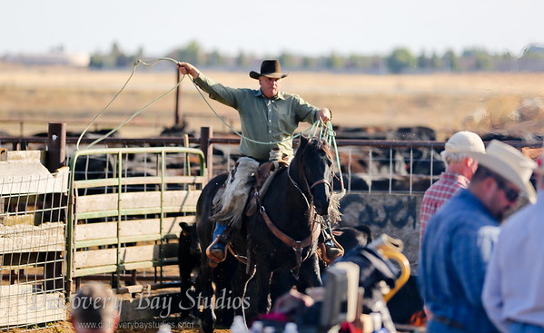 Baldwin Cattle Branding 11-11-2017