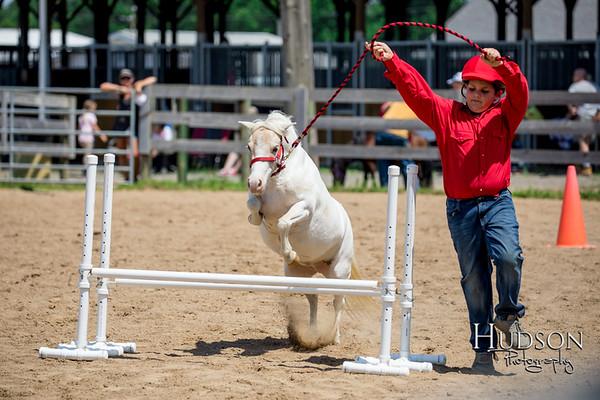 51 Mini Horse Jumping