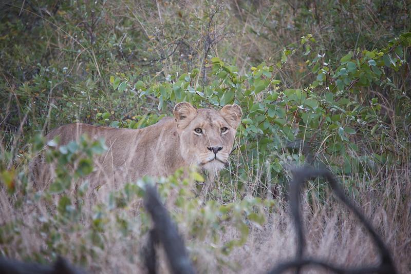 Africa-15.jpg