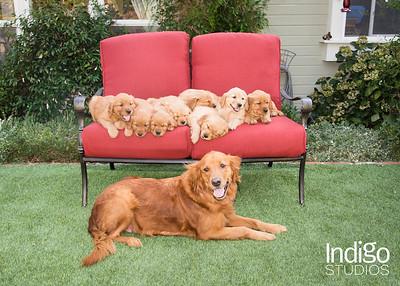 Carfi Puppies 2017