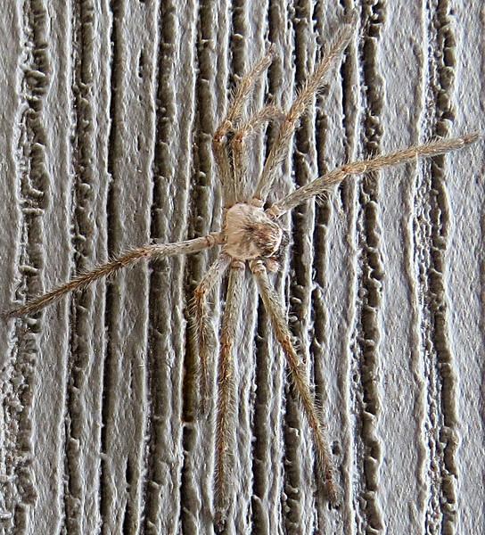 Spider on porch above2.jpg